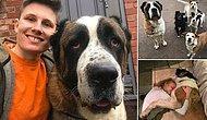 В Великобритании 80-килограммовый пес испугался фейерверка и умер от сердечного приступа