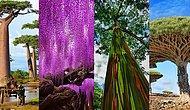 15 деревьев нашей планеты, которые очаровывают своей красотой