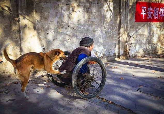 21. İş yerine ulaşabilmesi için sahibine yardım eden köpek...
