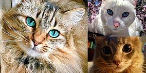17 Amazing Cats Who Could Make Victoria Secret Angels Jealous
