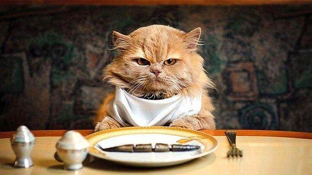 5. 1 yıl boyunca istediğin kadar en sevdiğin yiyeceği yiyebileceğini fakat karşılık olarak bir kereliğine kedi maması yemen gerektiğini söyleseler yer misin?