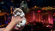 Денег куры не клюют: составлен рейтинг самых богатых животных мира