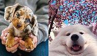 15 милых песиков, которые станут причиной широкой улыбки на вашем лице