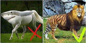 Тест: Знаете ли вы реально существующих гибридов животных?