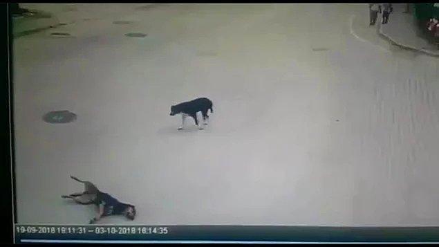 78. Bu nasıl bir vurdumduymazlık? - Minibüsüyle köpeği ezen ve arkasına bile bakmayan şoför