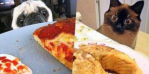 15+ Ultimately Cute Photos Of Pets Begging For Food That You Just Can't Resist!