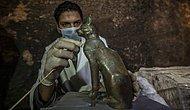 В Египте найдены десятки кошачьих мумий и статуй