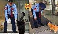 Two Art Lover Cats Have Been Trying To Get Into A Japanese Museum And It's Just Purrfect!