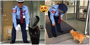 Purr Your Disappointment Away: Two Devoted Art Lover Cats Have Been Trying To Get Into The Museum In Japan!