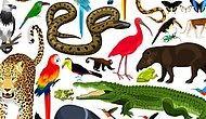 Тест: Какое вы животное?