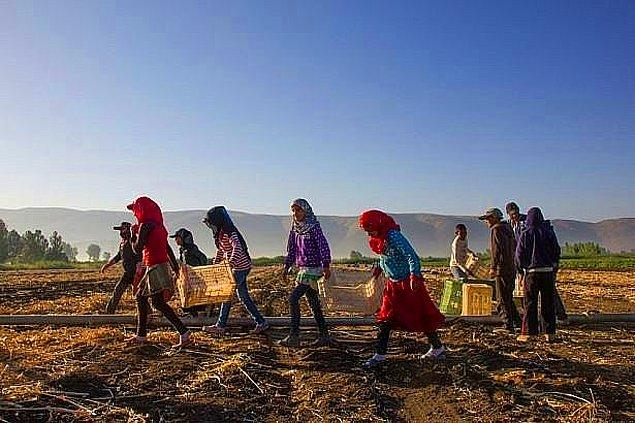 Ülkemizde hasat zamanında, milyonu aşkın tarım işçisi bir ilden diğerine göç ediyor. Bu yolculukta binlerce çocuk var.