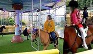 Carousel In China Blasted By Animal Lovers For Using Real Horses!