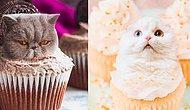 18 кошек, которые очень хорошо вписались в еду