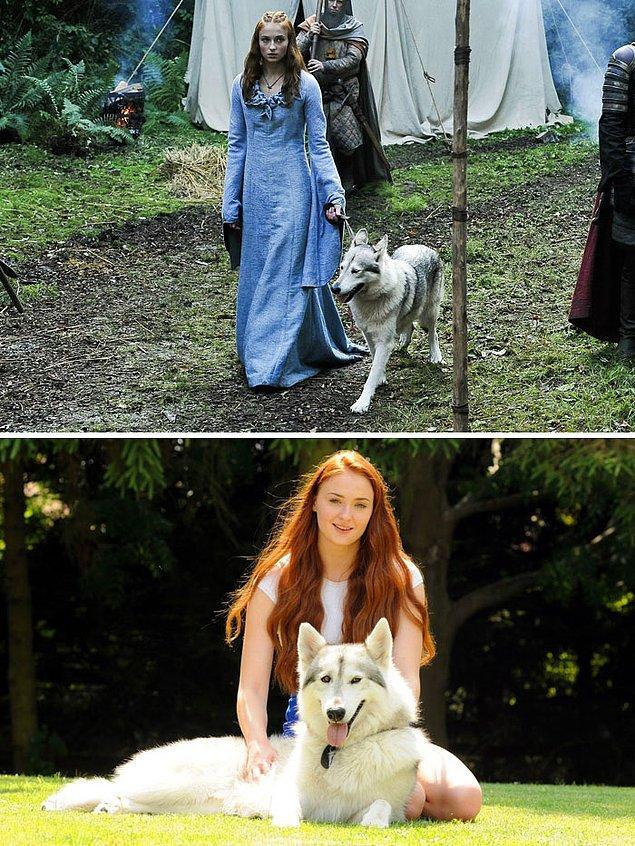 3. İlk sezonda Sansa'nın ulu kurdu Lady'nin çok kötü bir kaderi olsa da, kurt rolünü oynayan köpek Zunni için tam tersi geçerli.
