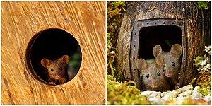 Cuteness Overload: Photographer Built Miniature Village For Mice Family!