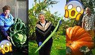 Размер имеет значение: Белорусские садоводы и дачники бьют все рекорды по размерам плодов своих трудов