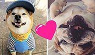 Хвостатый рейтинг: 20 самых трендовых пород собак по версии Инстаграма