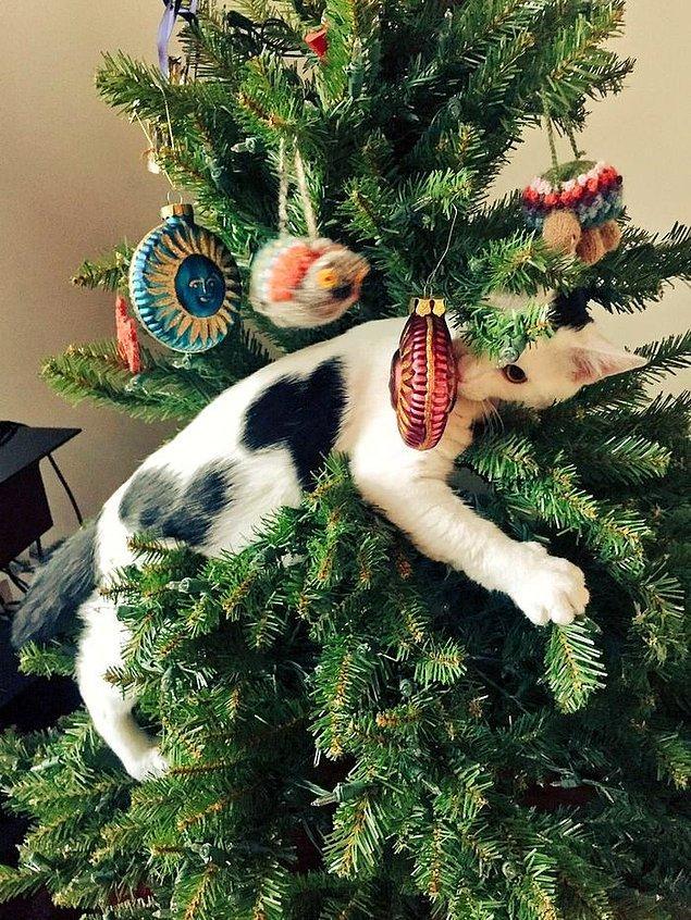 Картинка прикольной елки новогодней