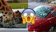 """11 фейлов, при виде которых автовладельцы подумают: """"Хоть бы со мной такого не случилось"""""""