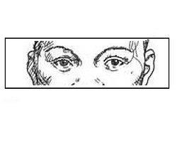 Если ваши глаза такие же, как на рисунке, вашими предками были представители негроидной расы.