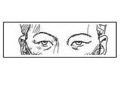 Если ваши глаза такие же, как на рисунке, вашими предками были представители монголоидной расы.