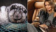 «Мех принадлежит животным, а не людям» - крупные бренды прекратили использование меха