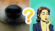 Тест: Сможете ли вы угадать зверька по его носику?