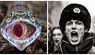 Объявлены лучшие снимки фотоконкурса National Geographic 2018 года