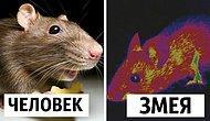 Как животные видят наш мир (магнитные поля, слоумо и ультрафиолет)