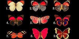 Тест: Какую бабочку вы бы выбрали? Ваш ответ даст понять, что в вашей жизни не устраивает вас на данный момент