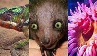 Тест: Сможете ли вы правильно распределить животных по классам?