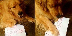 19 Utterly Funny Photos Of Cats And Dogs Confessing Their Crimes!