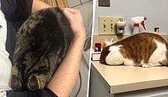 Под прикрытием: Как коты прячутся от ветеринаров, используя подручные средства (20+ фото)