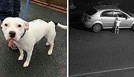 Сотни людей хотят приютить Снупа, пса, брошенного хозяином на трассе