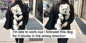 22 Good Boys From Twitter That'll Make You Happy As A Clam!