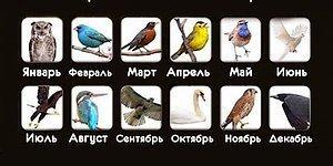 Тест: Что расскажет птица вашего месяца рождения?