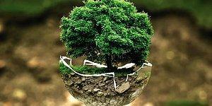 Тест для любителей природы: Угадайте дерево по фото