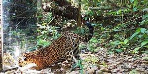 Фотограф решил узнать, что будет, если в тропическом лесу поставить зеркало