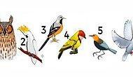 Тест: Выберите птицу и узнайте свое послание дня