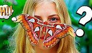 Тест: Бабочка, которую вы выберете, расскажет кое-какие секреты вашей личности, о которых и вы сами не подозреваете