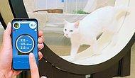 В Корее создали тренажер для толстых котиков