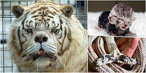 Two Heads, Extra Legs: 10 Of The World's Extraordinary Animals
