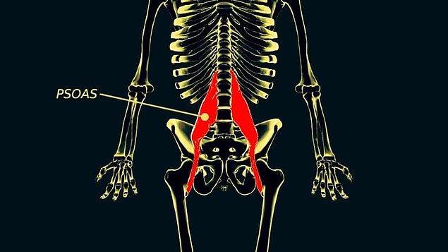 Psoas kası diyaframla bağlantılı olduğu için nefes alıp vermeyle de yakından ilişkili. Bu da psoasın anksiyete ve korkuyla bağlantılı olan fiziksel semptomlardan etkilendiği anlamına geliyor.