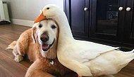 Ученые доказали, что собаки способны различать людей, которые хорошо и плохо относятся к их хозяевам