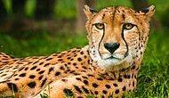 Тест: Если вы знаете всех этих животных на грани вымирания в лицо, то вы явно зоолог