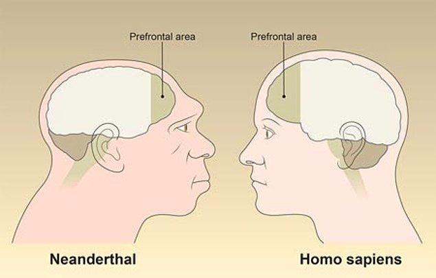 Peki, davranışsal çeşitliliklerimiz sayesinde daha üstün bir beyine sahip olduk?