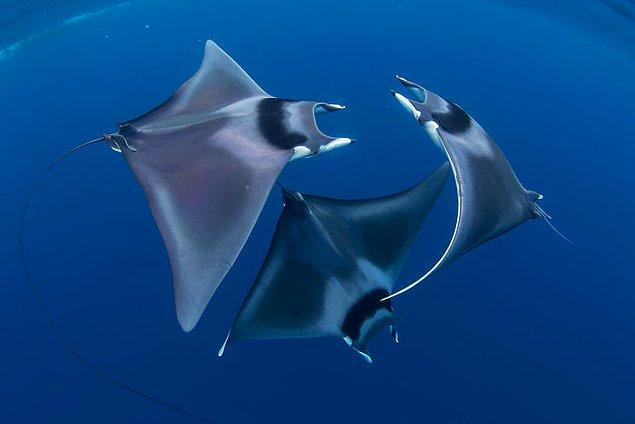 18. Birincilik, Deniz Yaşamı Davranışları ve Gösterinin En İyisi, Duncan Murrell.