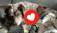 Как кошка с собакой: 25 парочек лучших друзей, которые размягчат ваше зачерствевшее сердце