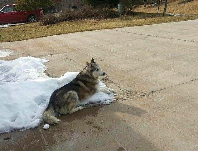 """9. """"Komşuların köpeğimin bütün kış boyunca dışarıda olması için havanın çok soğuk olduğu konusunda şikayetçiydiler. Onlara bunu gönderdim."""""""