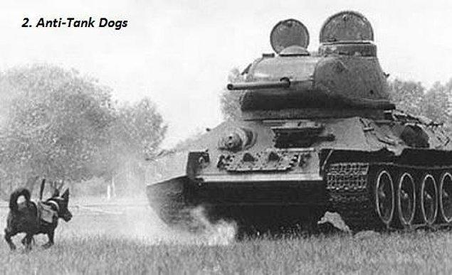 10. Sovyet güçleri üzerine patlayıcı bağlanmış köpekleri tanklara karşı silah olarak kullanıyorlardı. Arada sıradaysa köpekler geriye koşup Sovyetler'in arasında patlardı.